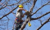 potatura-alberi-3-1024x768-810x608