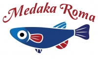 medaka1