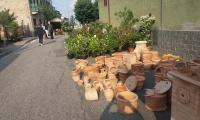 ranocchia-terracotta-005