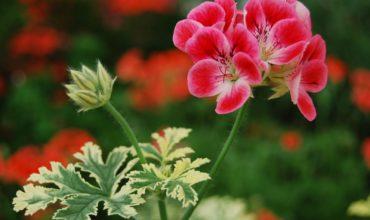 fiore-occhiello-1