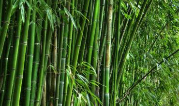 bamboo-img-new