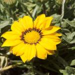 20-giallo-come-il-sole