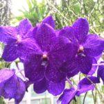 23-orchidea