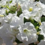 25 - bianco candore
