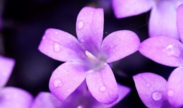 27-Melancholic-Violet-1920-1080