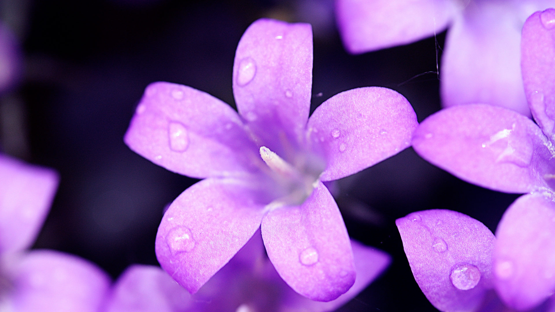 Melancholic-Violet