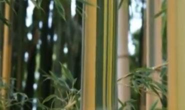 elemento-bambu