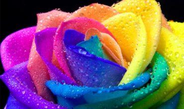 wonderful-rainbow-5-aprile