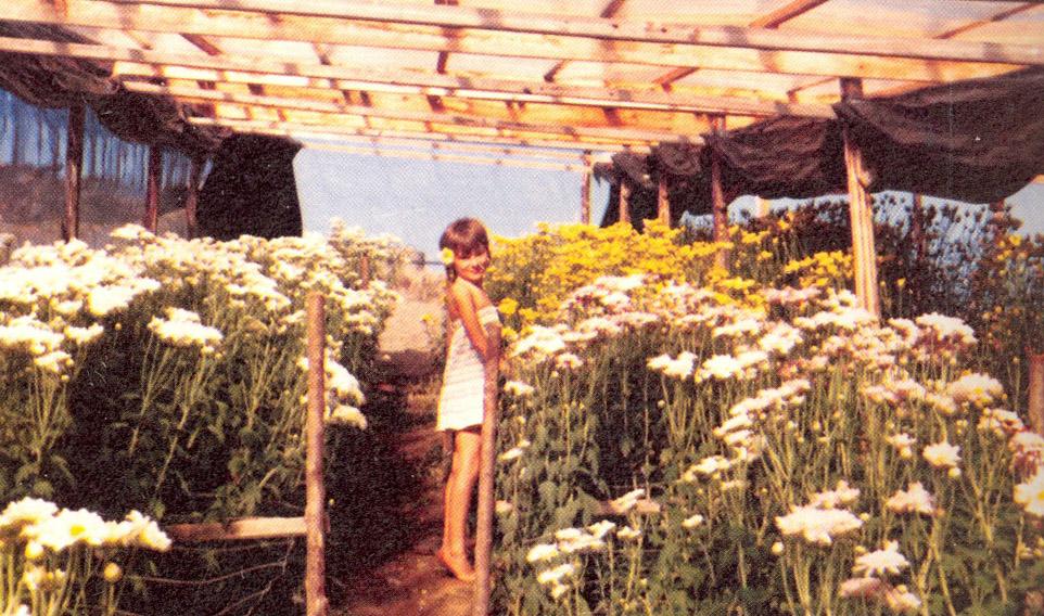 A giocare in mezzo ai crisantemi